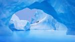 Обои Пингвины идут по айсбергу / Парня в горы тяни - рискни! Не бросай одного его, фотограф Sergii Vidov