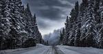 Обои Дорога между заснеженных деревьев, by Timothy Poulton