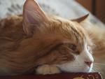 Обои Кошка лежит на книге