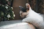 Обои Спящий котенок перед цветком, by Thomas Reuter