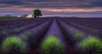 Обои Plateau de Valensole / Плато де Валансоль, Франция, France, by Sergey Aleshchenko