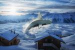 Обои Касатка в воздухе перед зимними домиками, by John Wilhelm