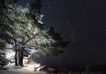 Обои Одинокая сосна в ночи на фоне звездного неба, Алтай, фотограф Павел Силиненко
