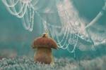 Обои Улитка сидит на грибе под бликами жемчужной паутины, фотограф Александр Гвоздь