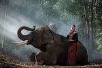 Обои Девушка Toey / Тои и слон Mong Kol в джунглях, Thailand / Тайланд, фотограф SUTIPOND SOMNAM