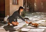 Обои Девушка протянула руку к котятам, by Dima Begma