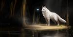 Обои Белый волк смотрит на птицу, by RhexFiremind