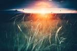 Обои Трава в лучах заходящего солнца