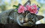 Обои Серая кошка с цветами на голове
