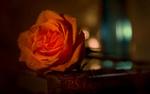 Обои Оранжевая роза в каплях воды лежит на книге (P. S. Я люблю тебя / P. S. I Love You)