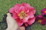 Обои В руке девушки розовый цветок