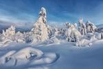 Обои Заснеженные деревья зимним днем, Мурманская область, фотограф Vladimir Lipetskih