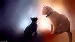 Обои Рыжая кошка смотрит на черно котенка, by Integrityy
