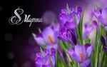Обои Фиолетовые крокусы и надпись 8 марта