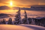 Обои Заснеженные деревья и туман, покрывающий долину в австрийских Alps / Альпах на закате дня
