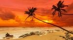 Обои Пальмы на берегу океана под закатным небом в оранжево-красных тонах