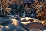 Обои Зимние ели и снежный покров в ночном свете, by Robert Didierjean