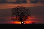 Обои Одинокое дерево на закате, фотограф Karyagin Aleksandr