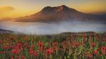 Обои Туманная долина у подножья горы