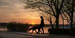 Обои Девушка с собакой прогуливается у озера, by mohamed hassan