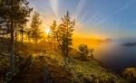 Обои Летний закат над Ладожским озером, Карелия / Золотой лес на острове, фотограф Лашков Федор