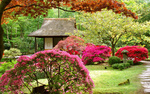 Обои Традиционный японский чайный домик в цветущем саду, Япония / Japan