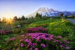 Обои Цветы вереска на закате, горный хребет Dead Horse, фотограф Erwin Buske