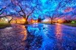 Обои Цветущие деревья вишни у Вашингтонского университета, by Erwin Buske