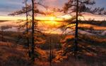 Обои Высокие, пожелтевшие лиственницы в свете заката, фотограф Михаил Туркеев