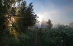 Обои Тропинка вдоль березовой рощи, туманным летним утром, фотограф Надежда Лаврова