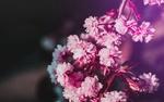 Обои Цветущая розовыми цветочками ветка