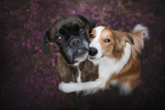 Обои Две собаки смотрят вверх, фотограф Anne Geier