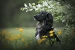 Обои Собака в цветах под веткой, фотограф Anne Geier