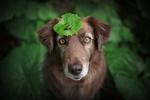 Обои Собаки с листом на голове, на котором маленькая улитка, фотограф Anne Geier