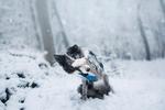 Обои Блодер-колли закрыла лапой мордочку, сидя в снегу, by Necerti