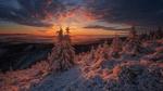Обои Заснеженные ели на фоне заката в горах, фотограф Iza i Darek Mitrega