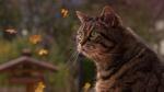 Обои Зеленоглазый кот на размытом фоне