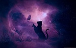 Обои Кошка перед бабочкой на фоне звездного ночного неба