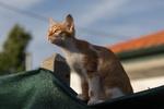 Обои Кошка сидит на крыше дома и куда-то смотрит