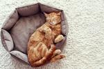Обои Спящий в лежаке рыжий кот