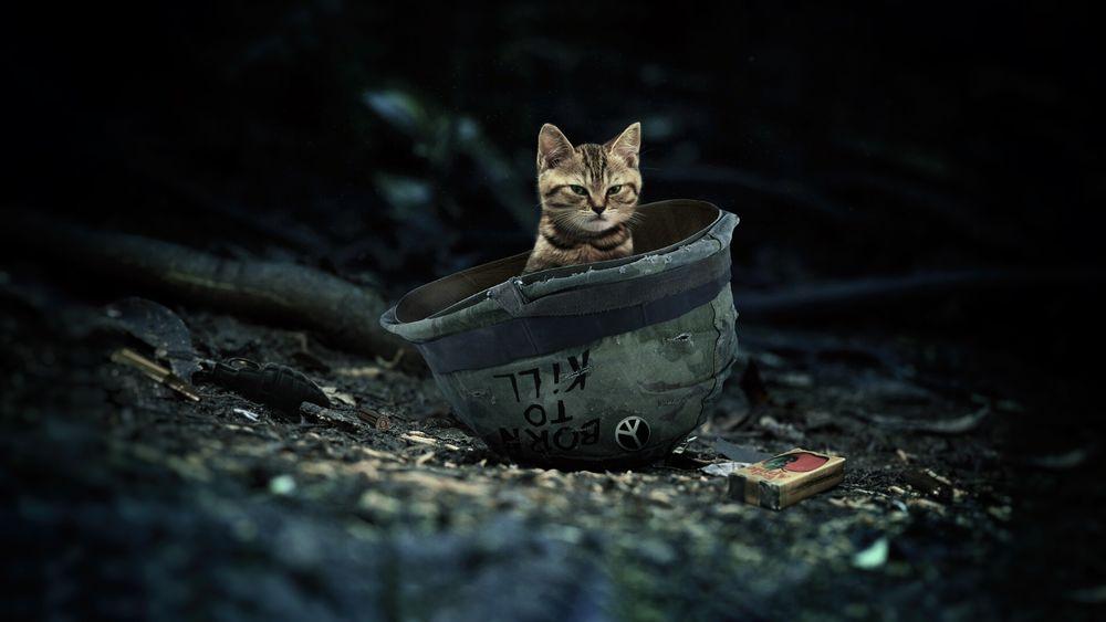 Обои для рабочего стола Полосатый котенок сидит внутри каски, by Zak Harrow