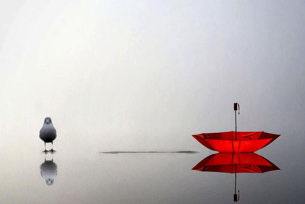 Обои для рабочего стола Красный зонт и голубь на воде, by Andre Villeneuve