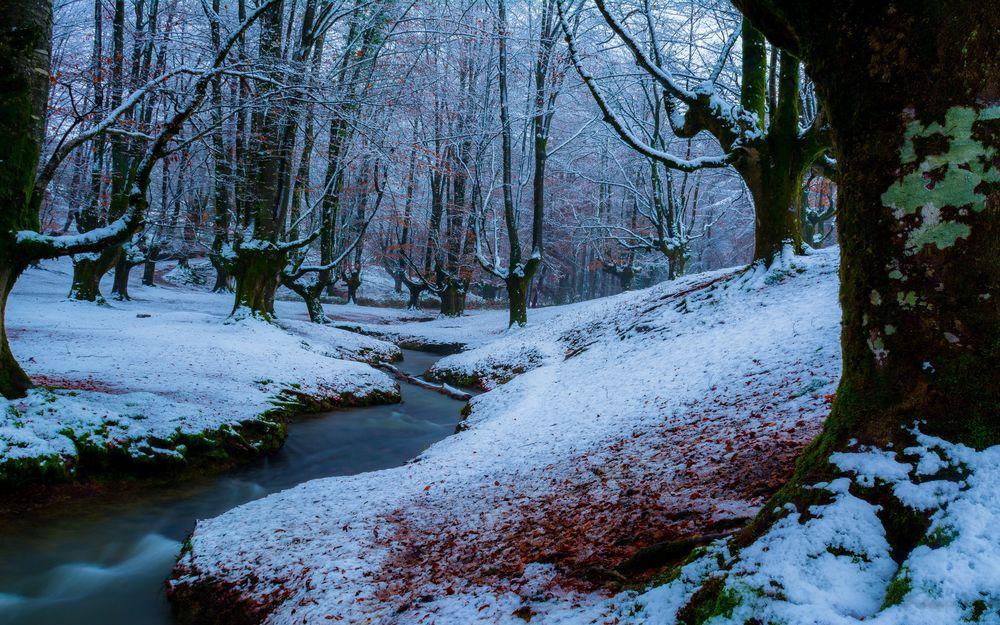 Обои для рабочего стола Снег на опавшей листве у ручья в опустевшем лесу