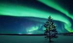 Обои Дерево на фоне северного сияния, by Carsten Meyerdierks