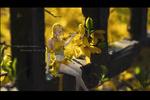 Обои Девушка в желтом платье сидит у желтого цветка (little yellow flowers, messenger spring / маленький желтый цветок, послание весны), by Rui Li