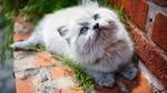Обои Пушистый котенок смотрит вверх, лежа на кирпичном карнизе