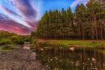 Обои Вечер в лесу, фотограф Сагайдак Павел