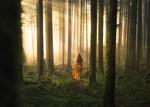 Обои Девушка идет по лесу, освещенном солнцем, by Lizzy Gadd