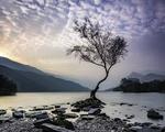Обои Одинокое дерево в озере Llyn Padarn / Лин Падарн, Северный Уэльс, Великобритания
