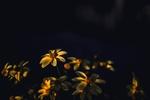 Обои Цветы в солнечных бликах, by Fotografierende